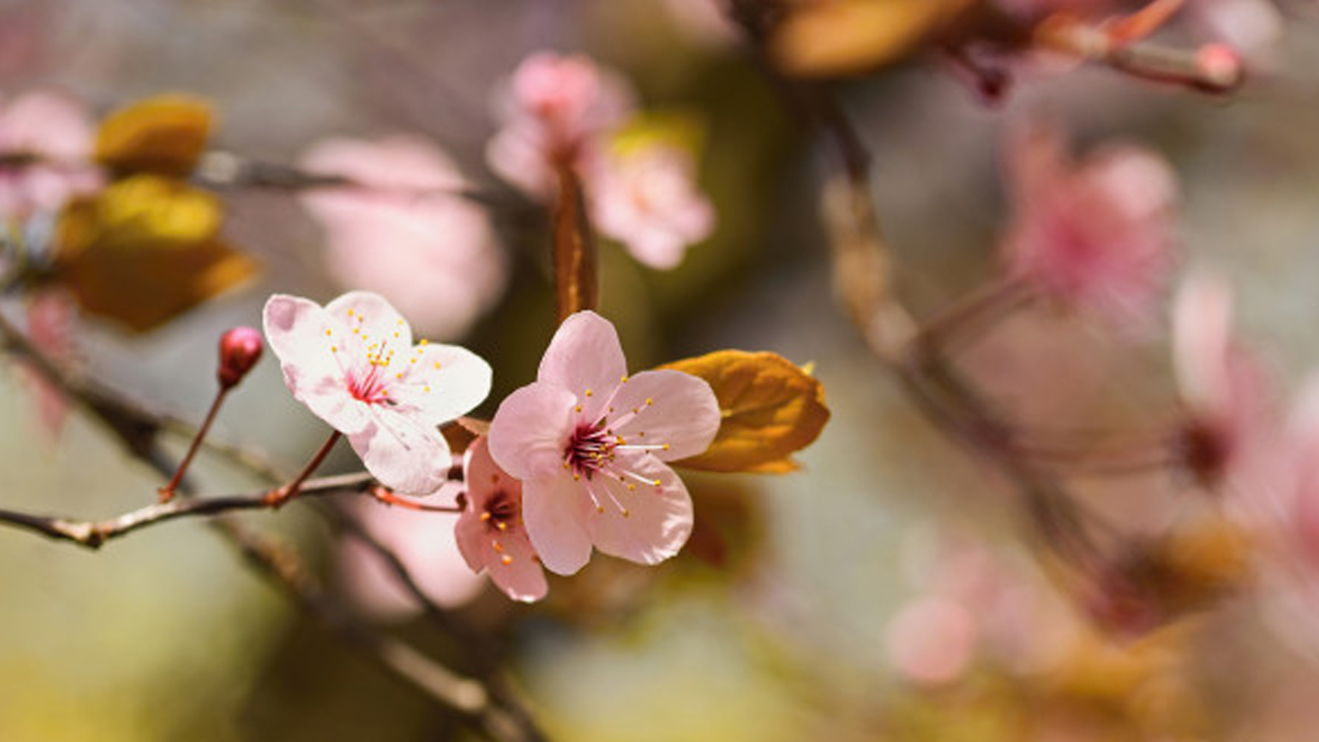 Prepárate para la llegada de la primavera
